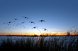 Waterfowl Sunset
