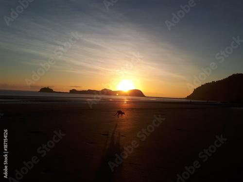 Fotobehang Kangoeroe Kangaroo hopping on the beach during sunrise