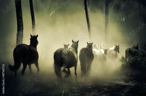 Fotobehang Natuur animal, horse