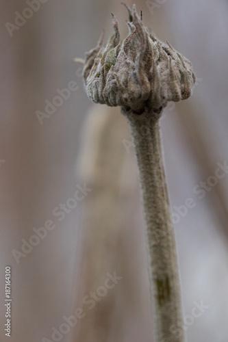 Pflanze überwintert - 187164300
