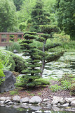 Japanese Garden in summer, exotic plants, Wroclaw, Poland