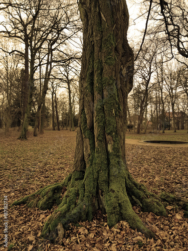 Artefakt eines alten Baumstammes mit Moos - 187182734