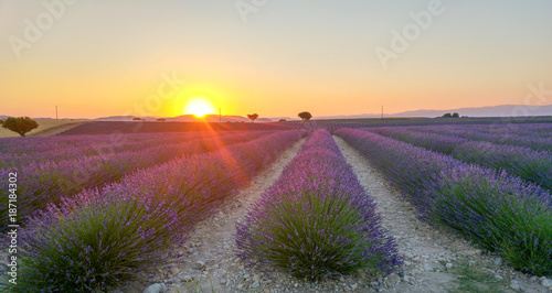 Foto op Aluminium Lavendel Beautiful lavender fields at sunset time. Valensole. Provence, France