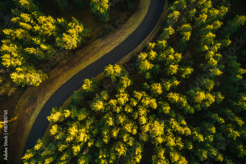 Aerial view on pine forest, road surrounded with pine trees from above