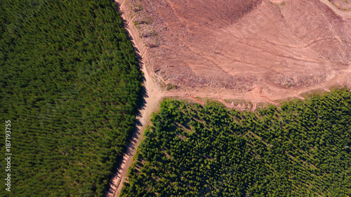 Fotobehang Zalm Deforestation