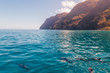 Beautiful dolphins swimming in the waves by the Na Pali cliffs near Kauai island. Hawaii Pacific Ocean wildlife scenery. Marine animals in natural habitat.