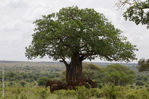 Papiers peints Baobab Elephants Under the Baobab Tree