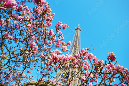 Foto Murales Pink magnolia flowers with Eiffel tower
