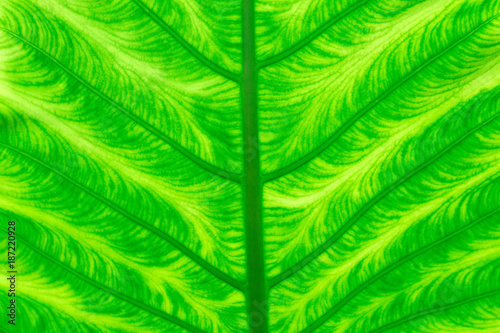 green leaf texture - 187220928