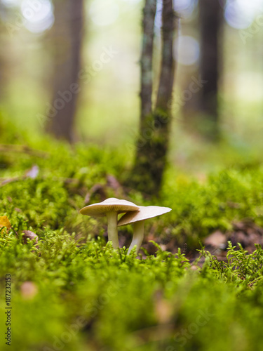 Beautiful Fungus, Moss & Toadstools of Finland Forests