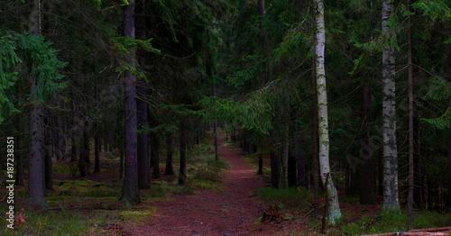 Papiers peints Route dans la forêt Ścieżka w lesie