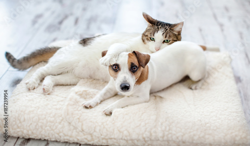 Dog and cat - 187239954