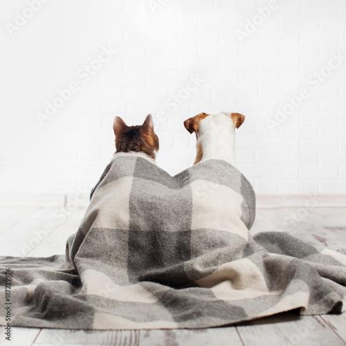 Aluminium Kat Dog and cat under a plaid