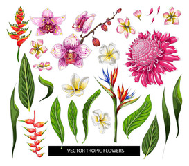 Set of tropical flowers. Vector design isolated elements.