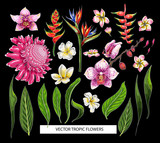 Set of tropical flowers. Vector design isolated elements. - 187241799