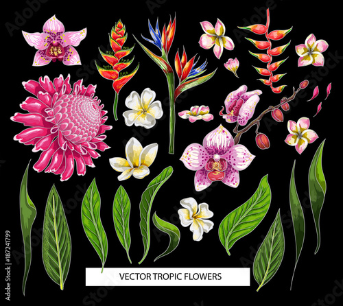 Zestaw tropikalnych kwiatów. Elementy projektu wektor na białym tle.