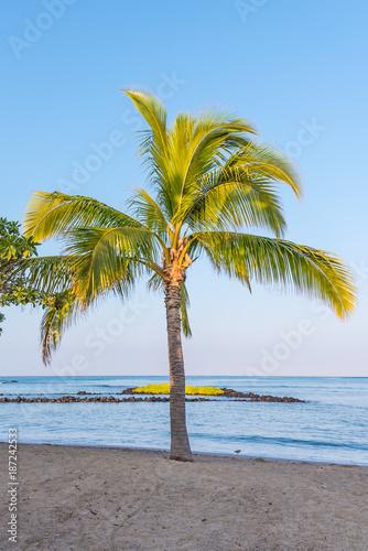 Keuken foto achterwand Tropical strand Palm Tree by the Ocean