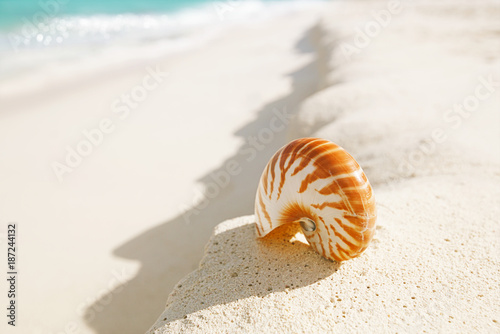 sea shell simple and elegant - 187244132