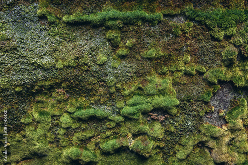 Rock covered with moss in Adrspach Rocks, part of Adrspach-Teplice landscape par Poster