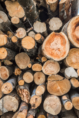 Stacked Logs Texture, Natural Background. Firewood stacked and prepared for winter. - 187252573