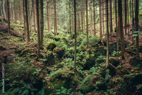 Forest in Teplice Rocks, part of Adrspach-Teplice landscape park in Broumov High Poster