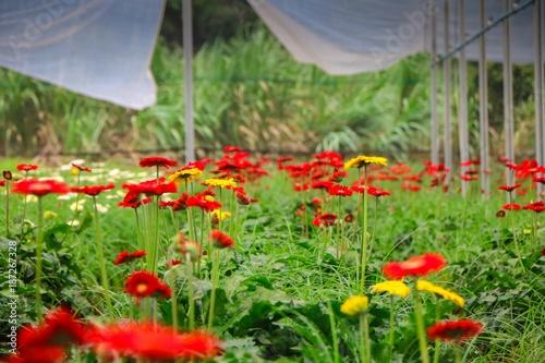 Fotobehang Klaprozen Flower