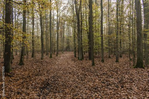 Foto op Plexiglas Weg in bos Mały mrozik i świcie