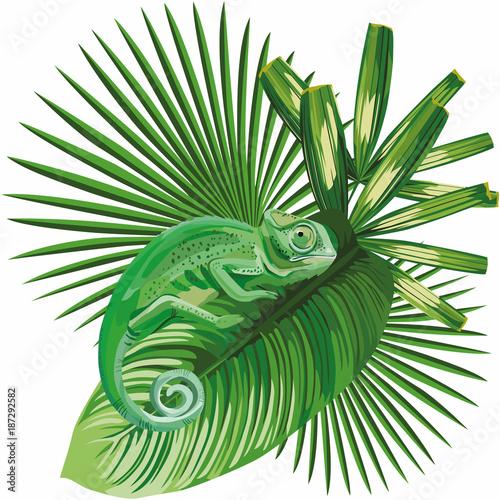kameleon na tropikalnych liści białe tło