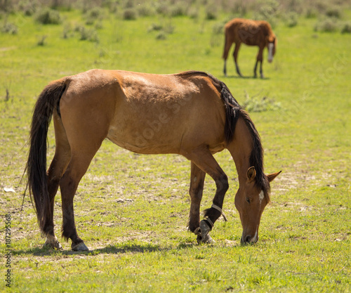 Fotobehang Paarden Horses in the pasture in the spring