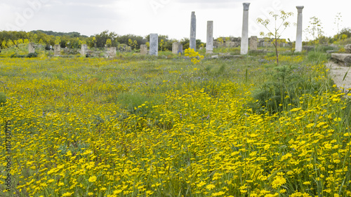 In de dag Honing Ancient ruins of Salamis with yellow flowers, Cyprus
