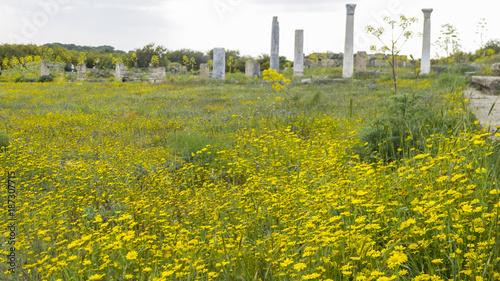Foto op Plexiglas Honing Ancient ruins of Salamis with yellow flowers, Cyprus