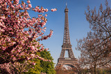 Fototapeta Eiffel Tower - Eiffel Tower with spring trees in Paris, France © samott