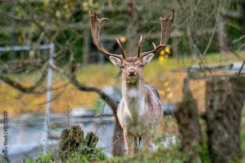 Aluminium Hert Tier Hirsch Geweih in Natur