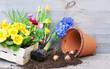 Leinwanddruck Bild - Spring, Frühling, Frühlingsblumen, pflanzen, anpflanzen, Pflanzzeit, Primeln, Narzissen, Textraum, copy space