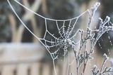 zamarznięta sieć pająka pajęczyna zimą