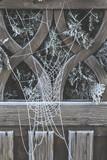 zamarznięta sieć pająka pajęczyna zimą na płocie