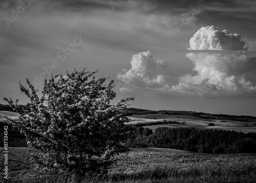 Deurstickers Grijs Rural landscape in summer, Hungary, black and white. Panoramic view of country fields, hills in background, dramatic sky and clouds..