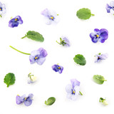 seamless pattern of purple blue pansy spring flowers and leaves on a white background, floral design photo collage - 187339500