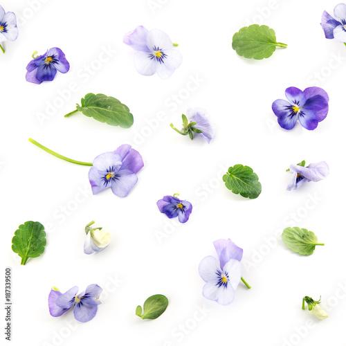wzor-fioletowy-niebieski-pansy-wiosennych-kwiatow-i-lisci-na-bialym-tle-kwiatowy-wzor-kolazu