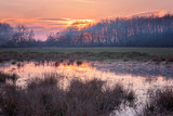Lovely spring marsh at sunset, colorful nature landscape - 187353553