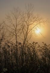Fog #1