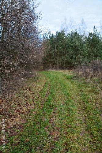 Foto op Plexiglas Weg in bos droga przez las