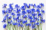 blue cornflowers background