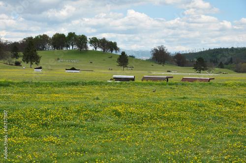 Deurstickers Blauwe hemel Prato primaverile con ostacoli, in centro equestre e sullo sfondo alberi e colline. Pratoni del Vivaro, Castelli Romani, Lazio, Italia