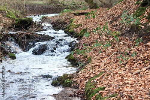 Foto Murales Flusslandschaft