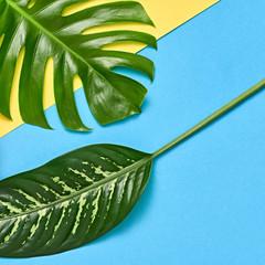 Creative Tropical Fresh Palm Leaves. Creative Summer Trendy Design Set. Colorful Fashion concept. Bright summer background, Beach. Minimal Art