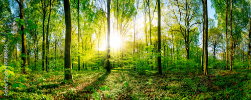 Spring in the forest with bright sun shining through the trees - 187388546