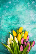 Vibrant tulips on concrete background.Easter or Spring template