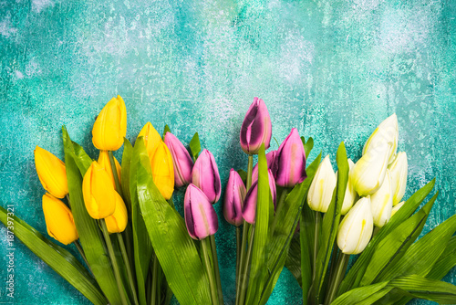 Vibrant tulips on concrete background,card template