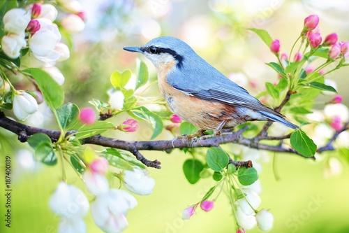 Fotobehang Natuur bird